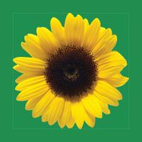 Sunflower chest ribbon